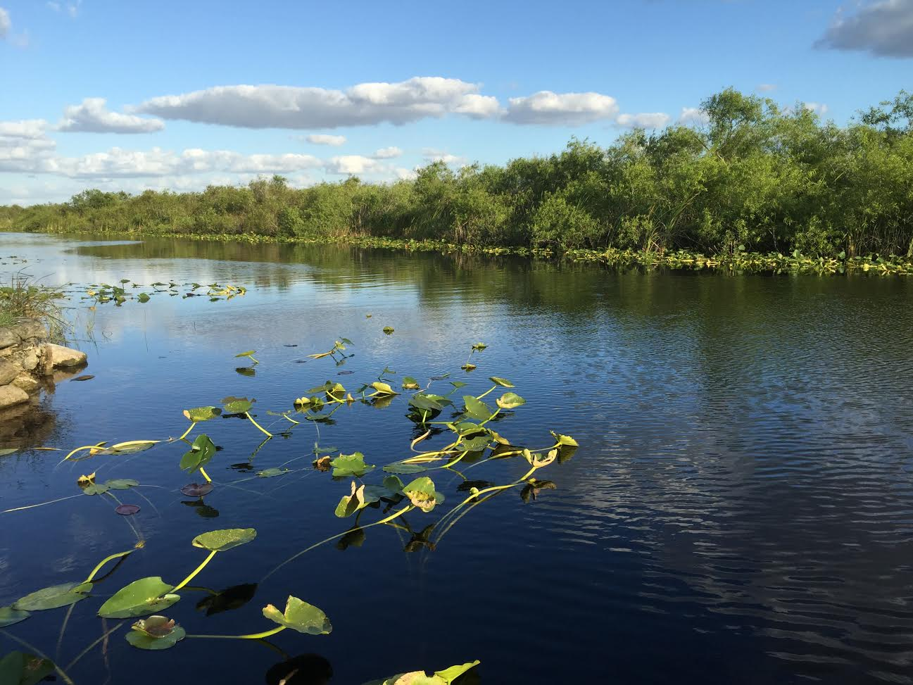 Everglades Pilar Velez
